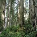 Restore Ecosystem