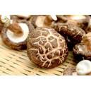 Raw wood S. Mushroom - 原木香花菇